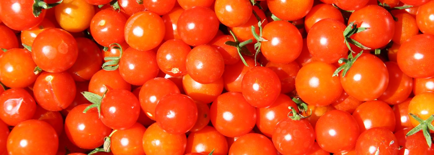 Projet Graines de Tomates